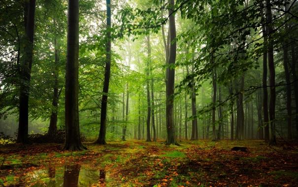 Фото обои лес, листья, вода, деревья, туман