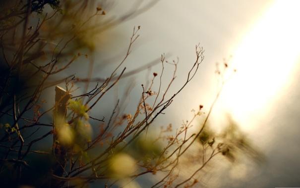Фото обои осень, макро, ветки, природа, фото, фон, обои