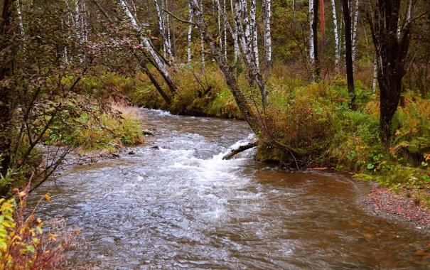 Фото обои осень, лес, деревья, ручей, кусты, берега