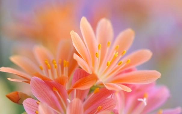 Фото обои макро, лепестки, сад, клумба