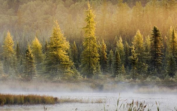 Фото обои лес, деревья, пейзаж, природа, туман, озеро, местность