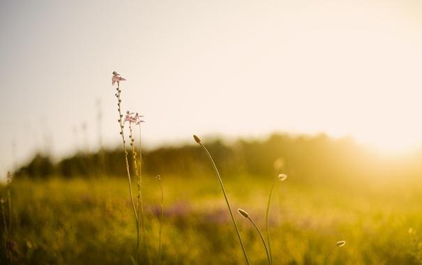 Фото обои поле, трава, лучи, свет, природа, растения