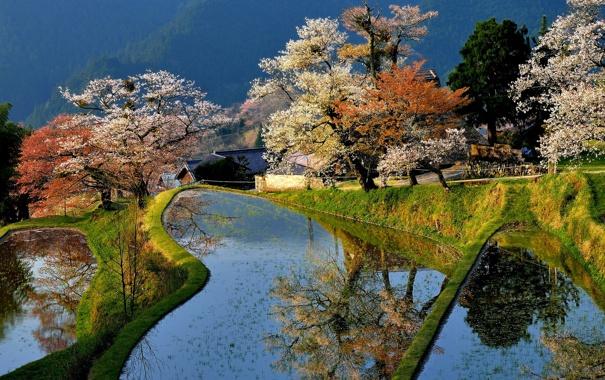 Фото обои деревья, дом, пруд, весна, Япония, сад, цветение