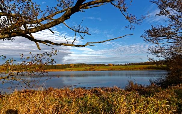 Фото обои осень, небо, трава, облака, деревья, ветки, река