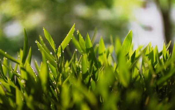 Фото обои трава, макро, роса, зеоень