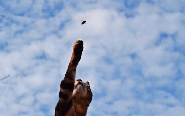Фото обои пчела, лапа, кошка