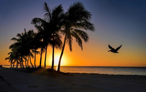Фото обои море, небо, пальмы, рассвет, птица, берег, силуэт