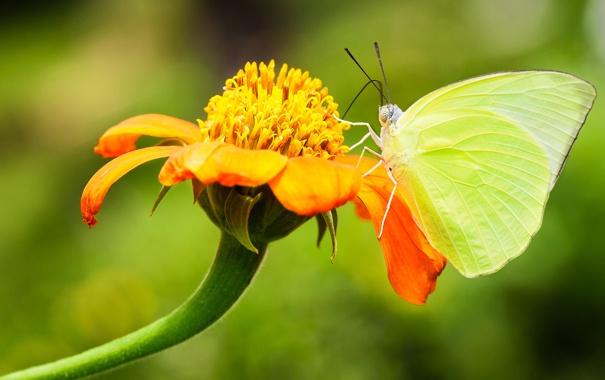 Фото обои цветок, лето, бабочка, фокус, насекомое