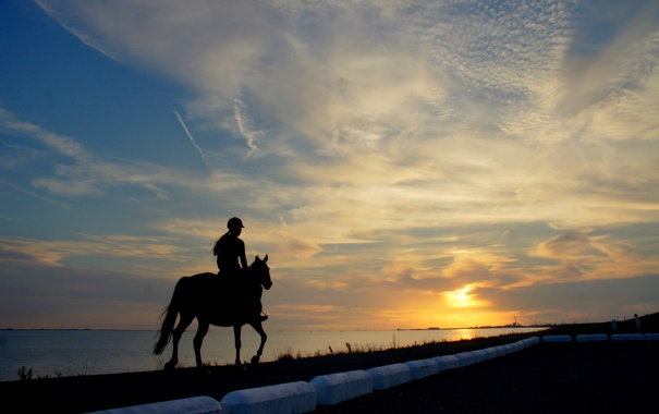 Фото обои вода, солнце, закат, лошадь