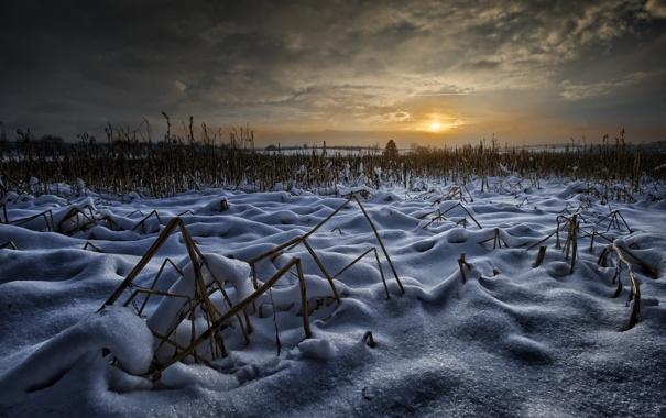 Фото обои зима, поле, ночь