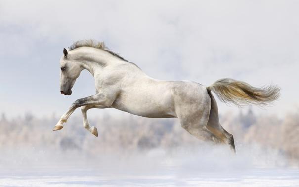 Фото обои лошадь, бег, бежит, конь