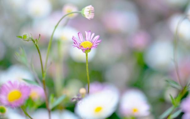 Фото обои зелень, поле, цветок, трава, розовый, поляна, нежность