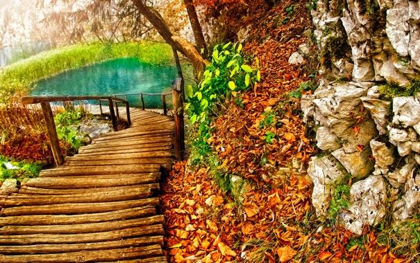 Фото обои дорога, листья, озеро