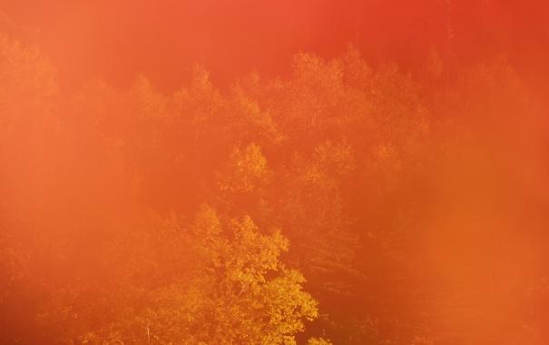 Фото обои осень, лес, деревья, дымка