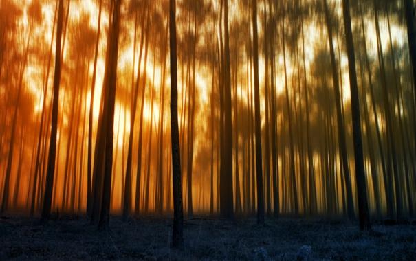 Фото обои лес, деревья, размытость