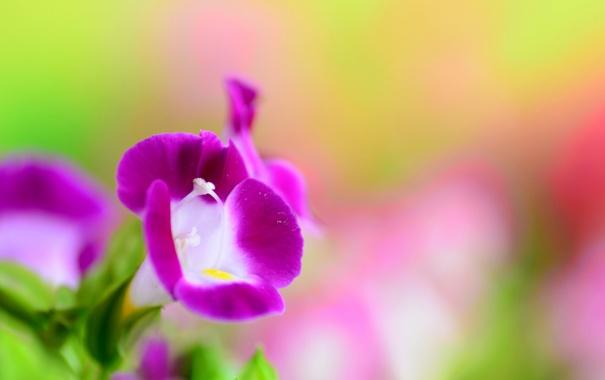 Фото обои растение, цветок, лепестки