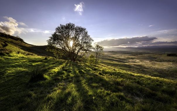 Фото обои поле, пейзаж, дерево, утро