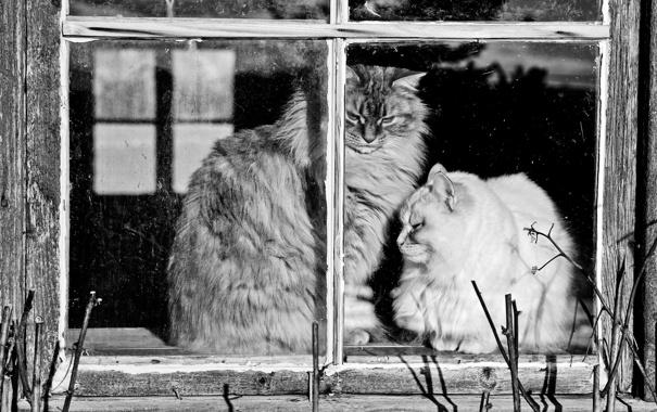 Фото обои стекло, кошки, рама, окно