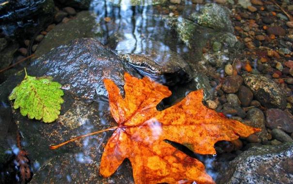 Фото обои осень, листья, вода, камни, дно