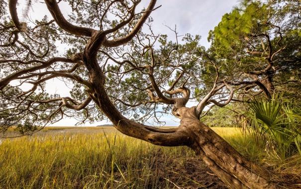 Фото обои лето, природа, дерево