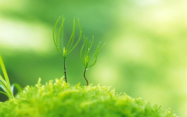 Фото обои зелень, трава, капли, макро, свет, природа, ростки