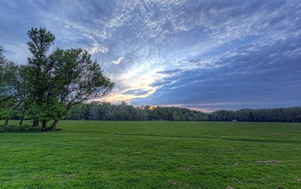 Фото обои поле, небо, пейзаж, дерево