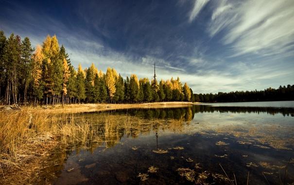 Фото обои осень, лес, небо, облака, деревья, пейзаж, природа