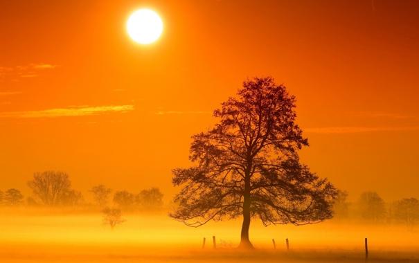 Фото обои свет, пейзаж, ночь, природа, дерево