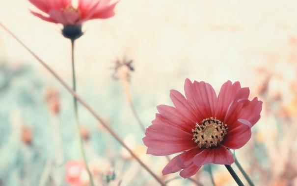 Фото обои цветы, лепестки, розовые