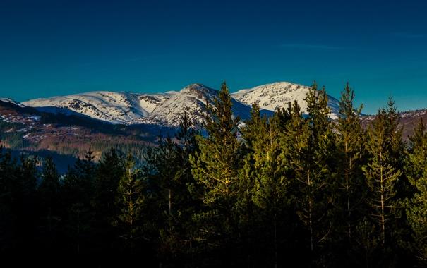 Фото обои небо, деревья, горы, Лес