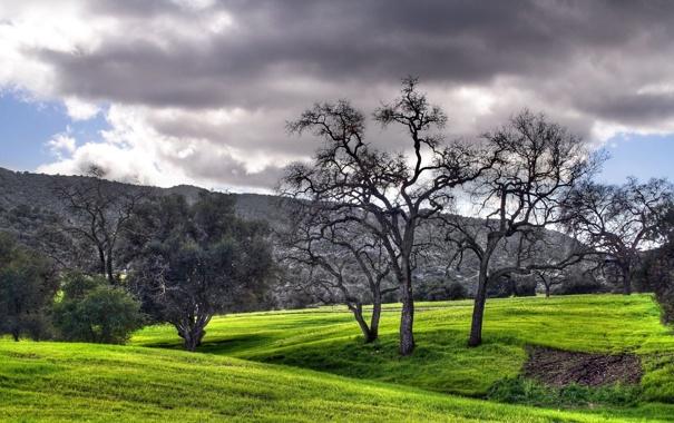 Фото обои небо, трава, облака, деревья, пейзаж, горы, природа