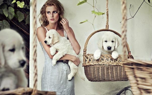 Фото обои собаки, девушка, платье, щенки, блондинка, белые, корзины