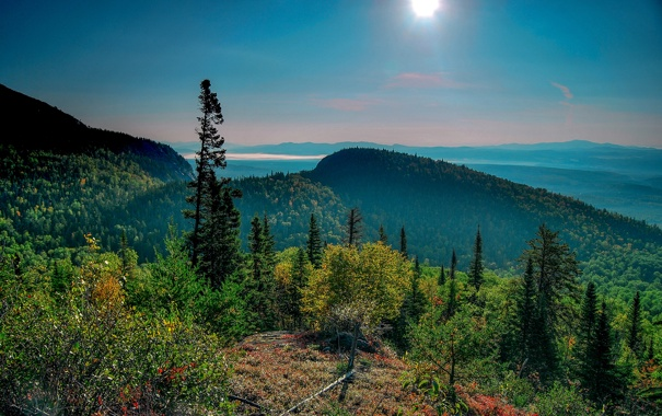 Фото обои лес, небо, солнце, лучи, деревья, горы, природа