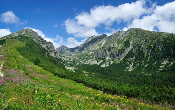 Фото обои дорога, небо, трава, облака, деревья, цветы, горы