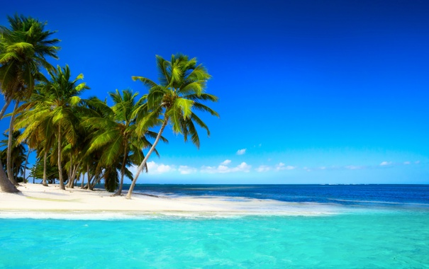 Фото обои море, пляж, тропики, пальмы