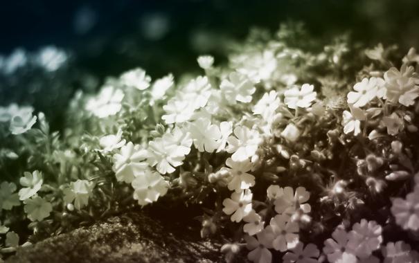 Фото обои цветы, лепестки, боке