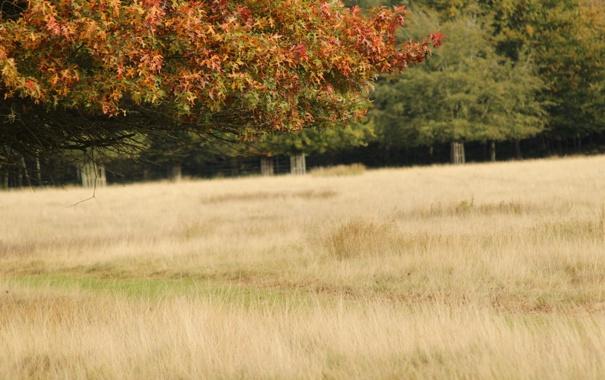 Фото обои поле, лес, трава, деревья, ветви, листва, конец лета