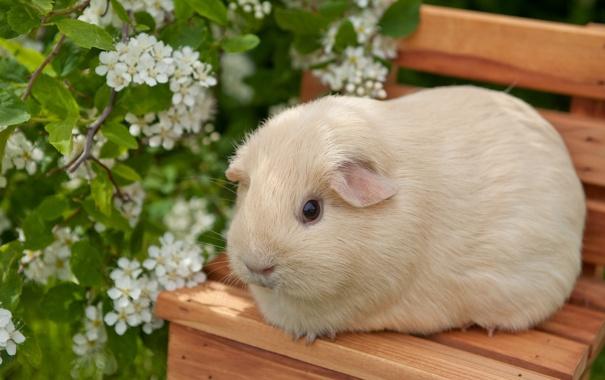 Фото обои цветы, стул, морская свинка