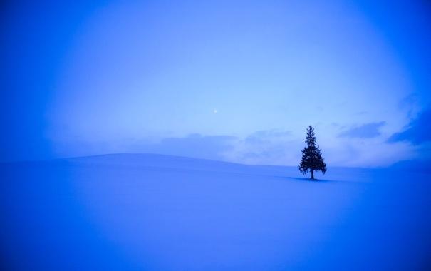 Фото обои зима, поле, небо, облака, снег, дерево, холмы