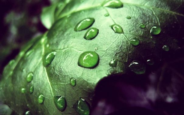 Фото обои листья, капли, макро, фото