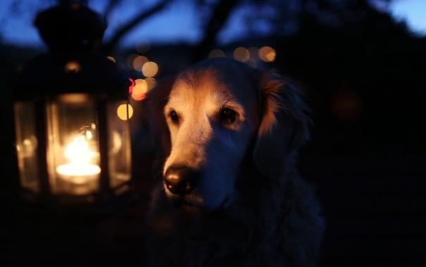 Фото обои свет, лампа, собака