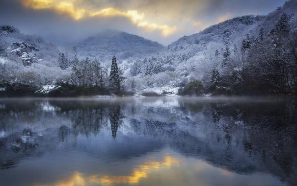 Фото обои зима, иней, деревья, озеро