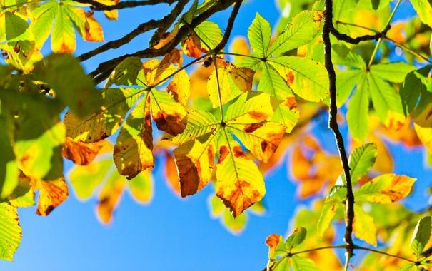Фото обои ветки, небо, Осень, свет, листва, дерево