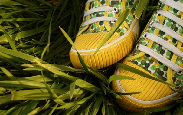 Фото обои трава, кеды, шнурки, лакост