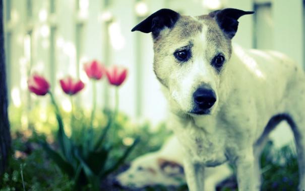Фото обои друг, цветы, собака