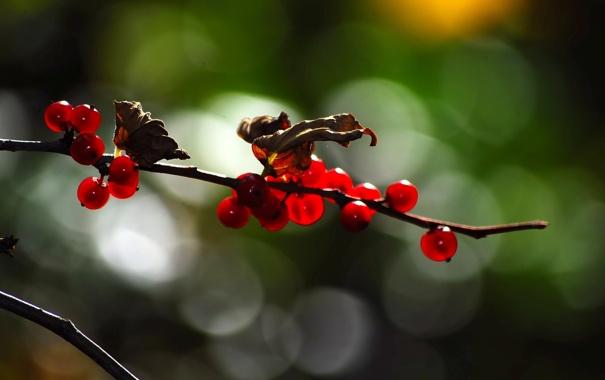Фото обои листья, цвета, природа, блики, ягоды, фон, обои