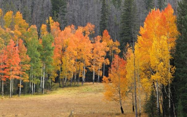 Фото обои поляна, лес, осень, деревья