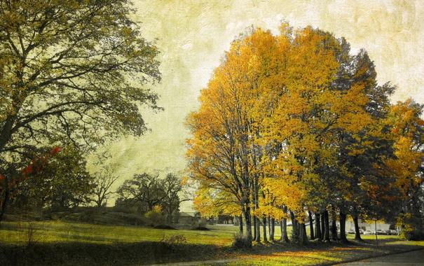 Фото обои деревья, город, стиль, улица