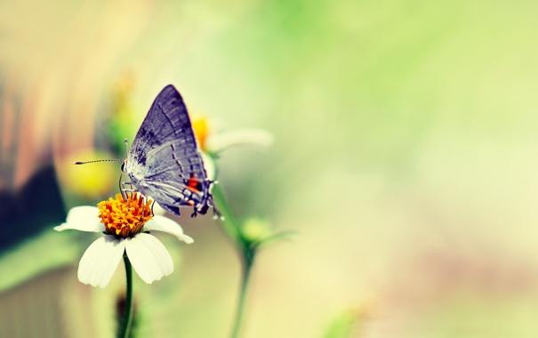 бабочка на зеленой траве  № 1396132 загрузить