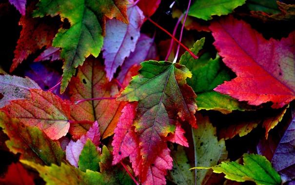 Фото обои осень, листья, природа, краски, багрянец